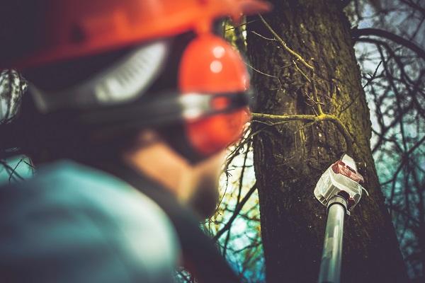 Regras de remoção de árvores