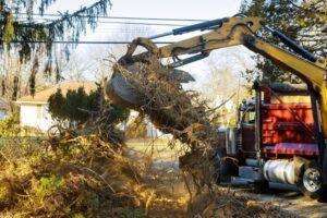 Regras de remoção de árvores na Supressão Vegetal